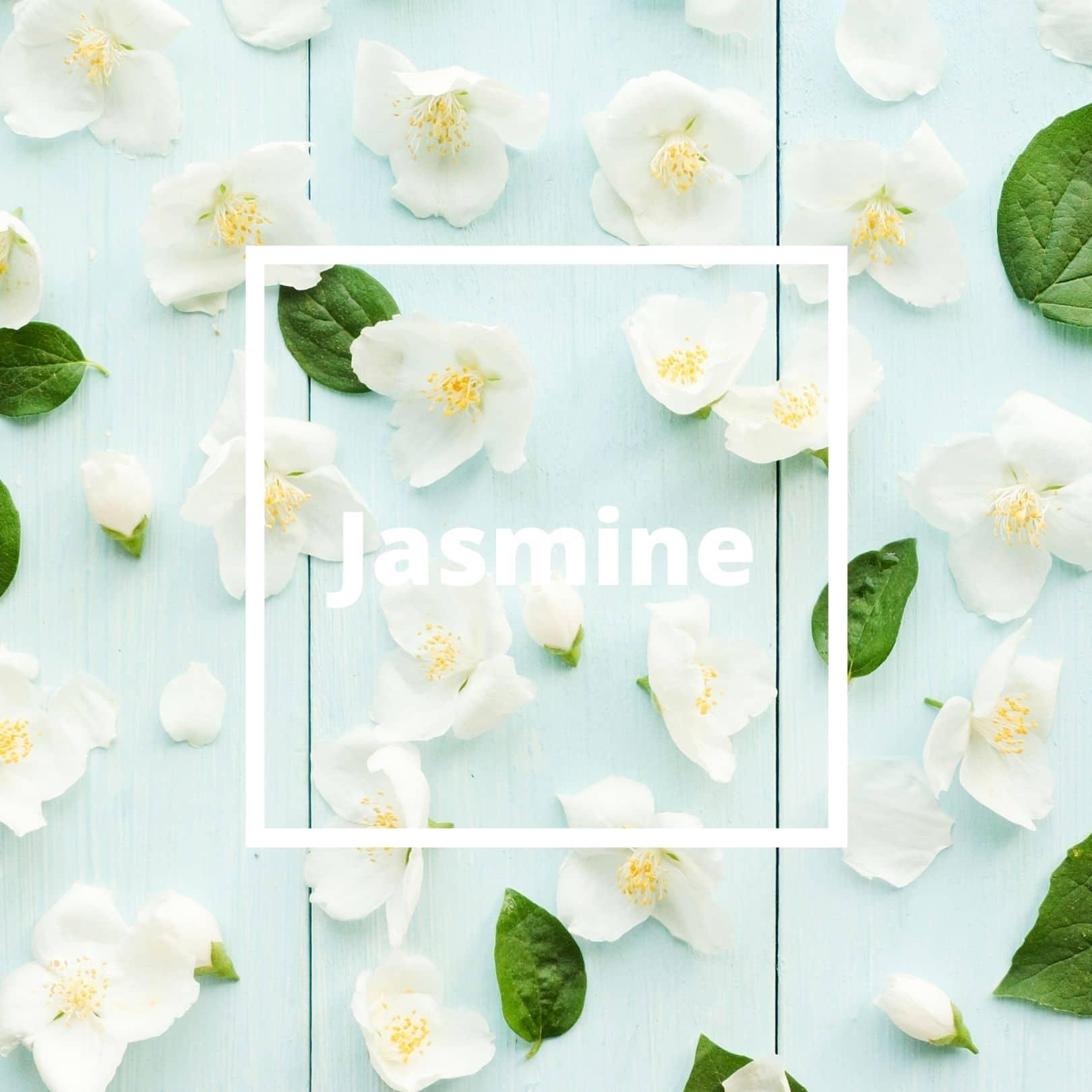 L'ATELIERO - Jasmine - Jasmine Dream