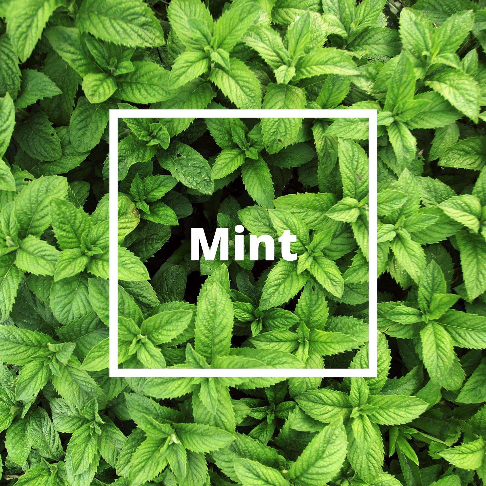 L'ATELIERO - Mint - Irresistible Man