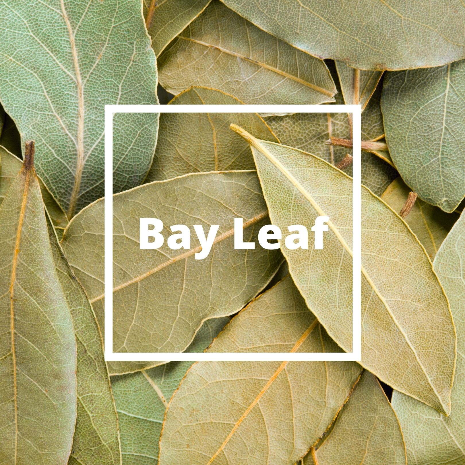 L'ATELIERO - Bay Leaf - The One