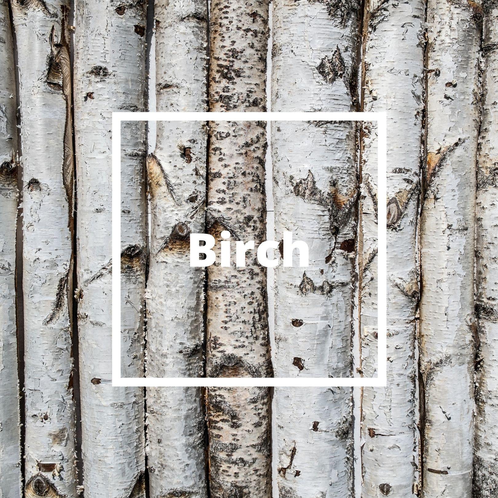 L'ATELIERO - Birch - Victorious