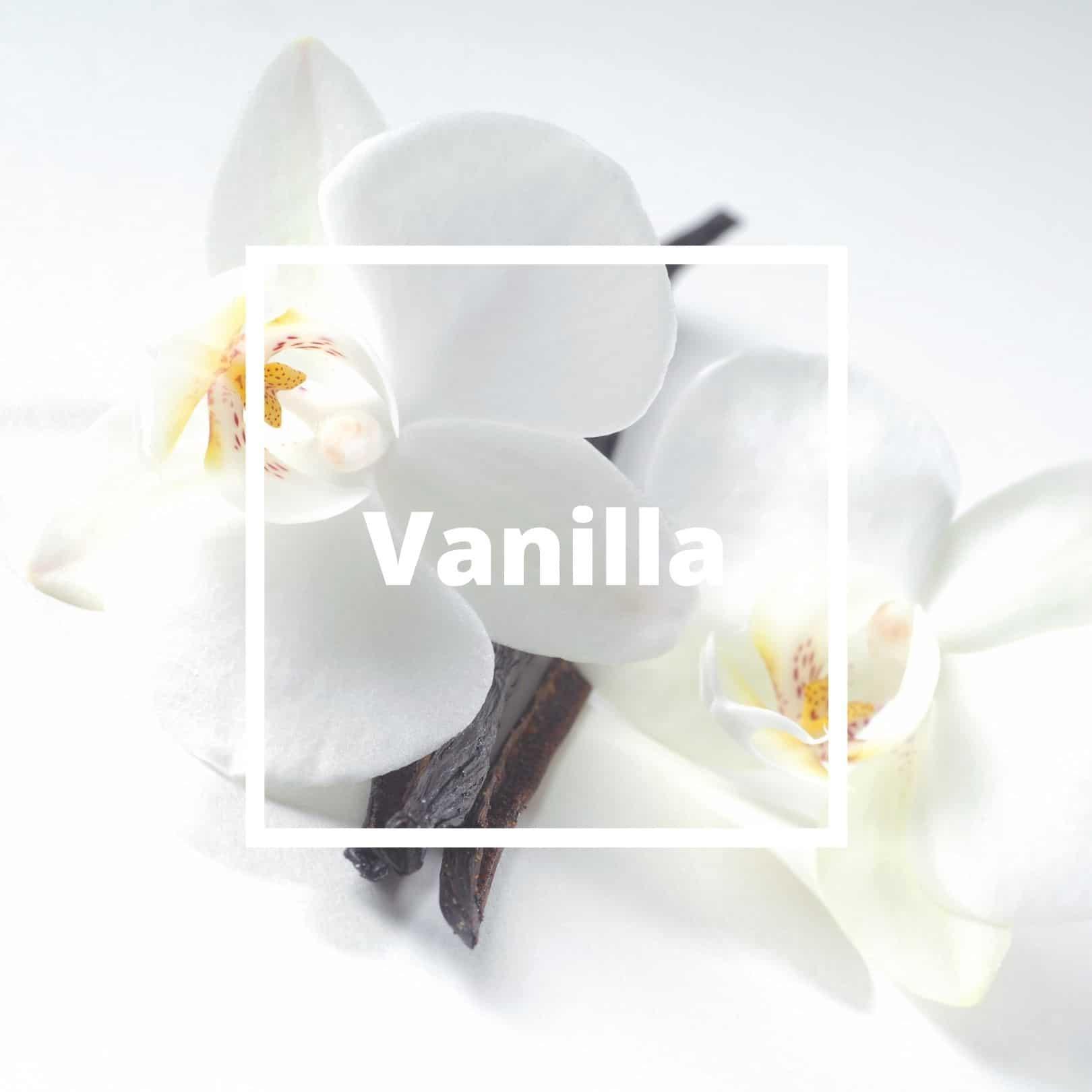 L'ATELIERO - Vanilla - Belle Mademoiselle